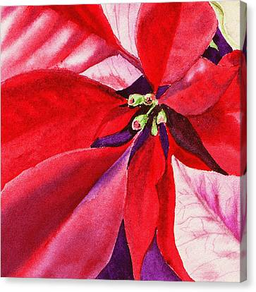 Red Poinsettia Plant Canvas Print by Irina Sztukowski