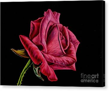 Red Rose On Black Canvas Print by Sarah Batalka