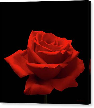 Red Rose On Black Canvas Print by Wim Lanclus