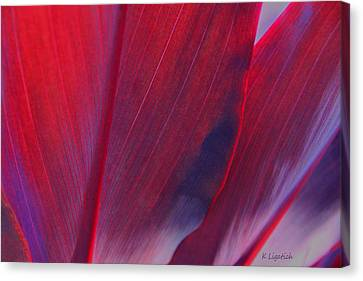 Red Ti Leaves At Last Light Canvas Print by Kerri Ligatich