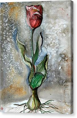 Red Tulip Canvas Print by Mindy Newman