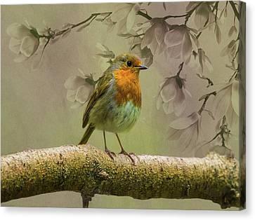 Redbreast Bird Canvas Print by Movie Poster Prints