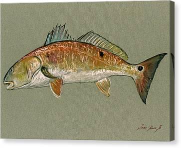 Redfish Watercolor Painting Canvas Print by Juan  Bosco
