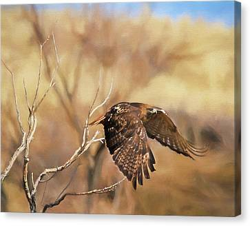Redtail On The Move Canvas Print by Donna Kennedy