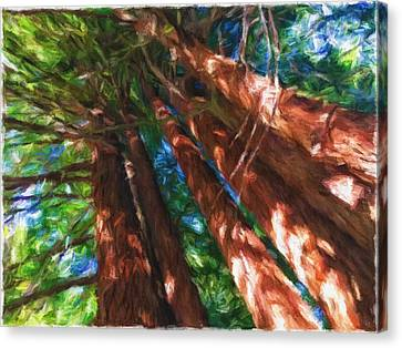 Redwoods 2 Canvas Print by Jonathan Nguyen