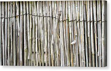 Reed Background Canvas Print by Tom Gowanlock