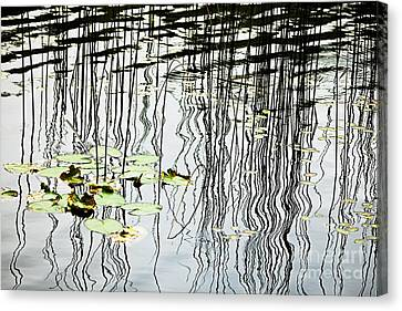 Reeds And Reflections Canvas Print by Dave Fleetham - Printscapes