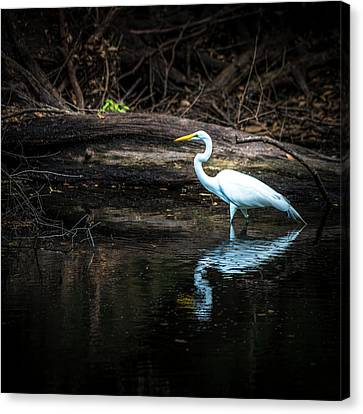 Reflecting White Canvas Print by Marvin Spates