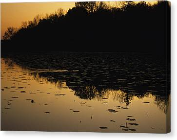 Reflection In The Water At Everglades Canvas Print by Stacy Gold