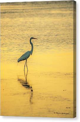 Reflection Canvas Print by Marvin Spates