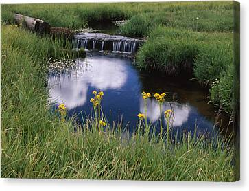 Reflections - Casa Vieja Meadows Canvas Print by Soli Deo Gloria Wilderness And Wildlife Photography