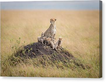 Regal Protector Canvas Print by Ted Taylor
