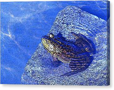 Relaxing In The Pond At A Local Vineyard...ahhh Canvas Print by Margaret Hood