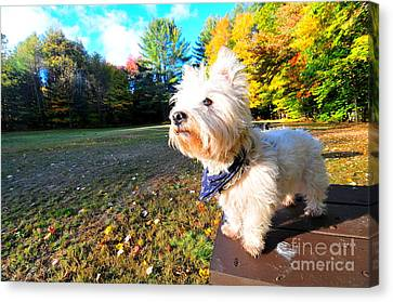 Reminiscing Westie Canvas Print by Catherine Reusch Daley