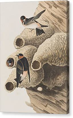 Republican Or Cliff Swallow Canvas Print by John James Audubon