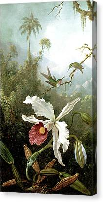 Retouched Masters - Orchid And Hummingbirds In Tropical Forest Canvas Print by Audrey Jeanne Roberts