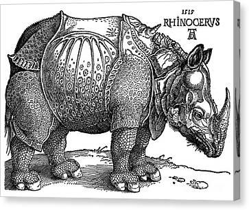 Rhinoceros 1515 Canvas Print by Padre Art