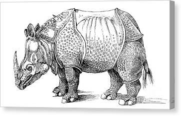 Rhinoceros Canvas Print by Albrecht Durer