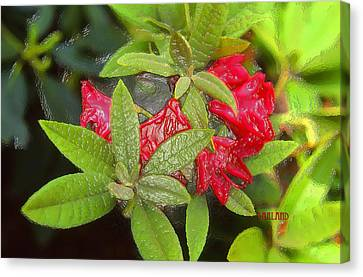 Rhodendron In 3d Canvas Print by Garland Johnson