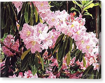 Rhodo Grove Canvas Print by David Lloyd Glover