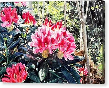 Rhododendrons Of British Properties Canvas Print by David Lloyd Glover