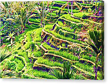 Rice Terraces Of Bali Canvas Print by Jerome Stumphauzer