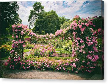 Riches Of Roses Canvas Print by Jessica Jenney