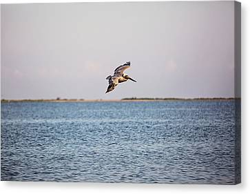 Riding The Breeze Over The Gulf Waters Canvas Print by Scott Pellegrin