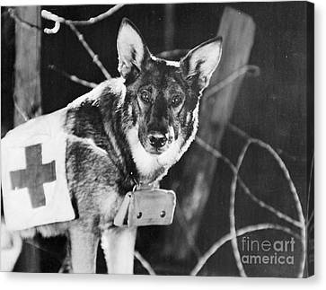 Rin-tin-tin (1916-1932) Canvas Print by Granger