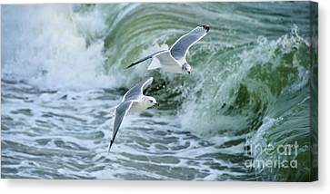 Ring-billed Gulls II Canvas Print by Mark Roger Bailey