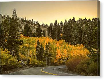 Road In Autum Canvas Print by Maria Coulson