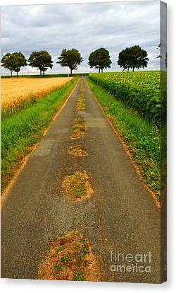 Road In Rural France Canvas Print by Elena Elisseeva