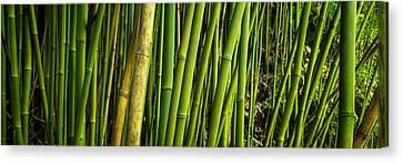 Road To Hana Bamboo Panorama - Maui Hawaii Canvas Print by Brian Harig