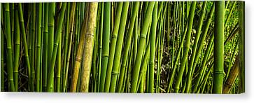 Road To Hana Bamboo Panorama - Maui Hawaii Canvas Print by Brian Harig