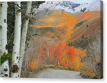 Road To North Lake Canvas Print by Mary HorseyPhotog