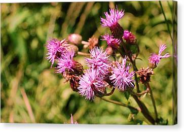 Roadside Beauty Canvas Print by Jame Hayes
