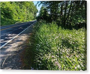 Roadside Wildflowers Canvas Print by Laurie Breton