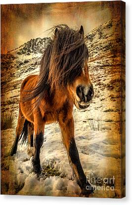 Roaming Free Canvas Print by Adrian Evans