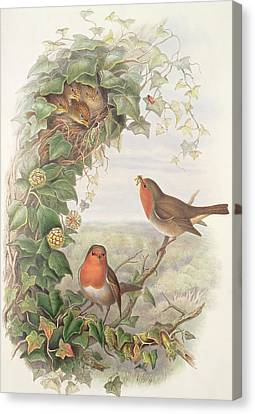 Robin Canvas Print by John Gould