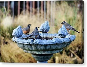 Robins On Birdbath Canvas Print by Barbara Rich
