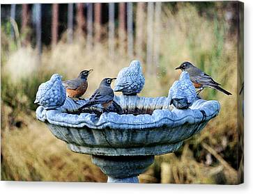 Robins On Birdbath Canvas Print by Barbara Rich