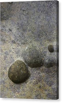 Rock Pockets  Canvas Print by Elizabetha Fox