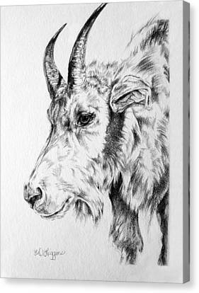 Rocky Mountain Goat Canvas Print by Derrick Higgins
