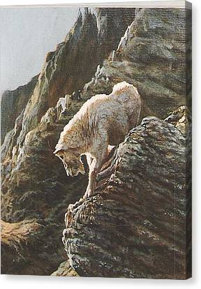 Rocky Mountain Goat Canvas Print by Steve Greco