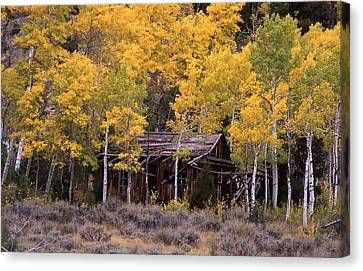 Rocky Mountain Homestead Canvas Print by Cynthia  Cox Cottam