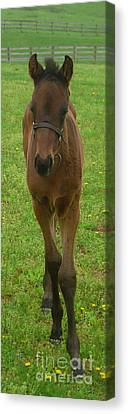 Rocky Canvas Print by Patricia A Griffin