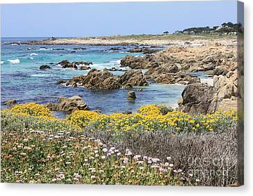 Rocky Surf With Wildflowers Canvas Print by Carol Groenen