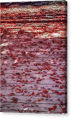 Rolling Out The Red Carpet Canvas Print by John Haldane
