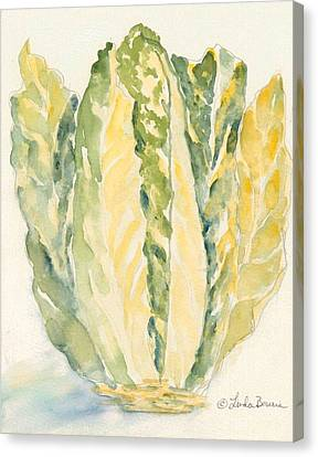 Romaine Canvas Print by Linda Bourie