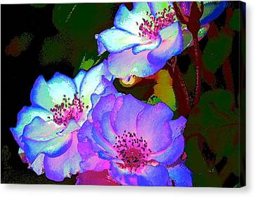 Rose 127 Canvas Print by Pamela Cooper